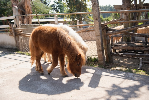 Poney mignon dans le zoo