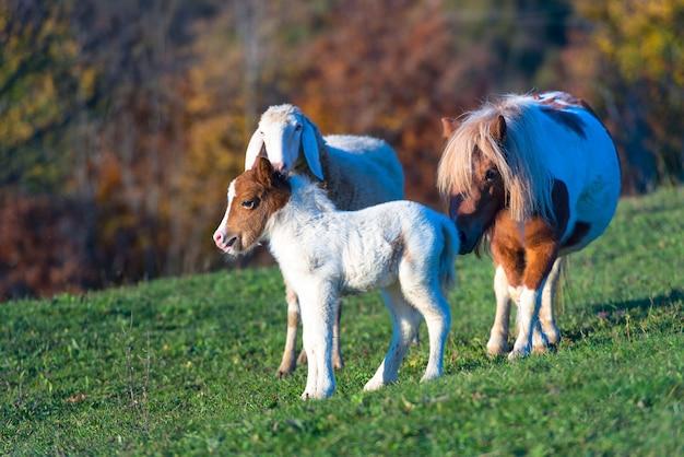 Un poney avec le petit et un mouton