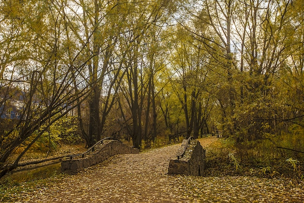 Pont au-dessus de l'eau au milieu des arbres à feuilles vertes au parc rostrkino en russie