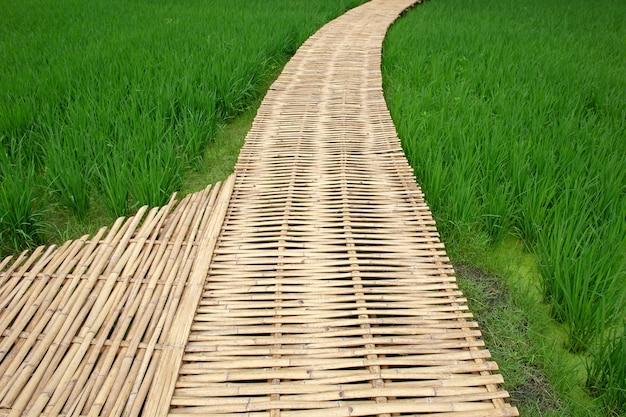 Pont de bambou dans la rizière verte, thaïlande
