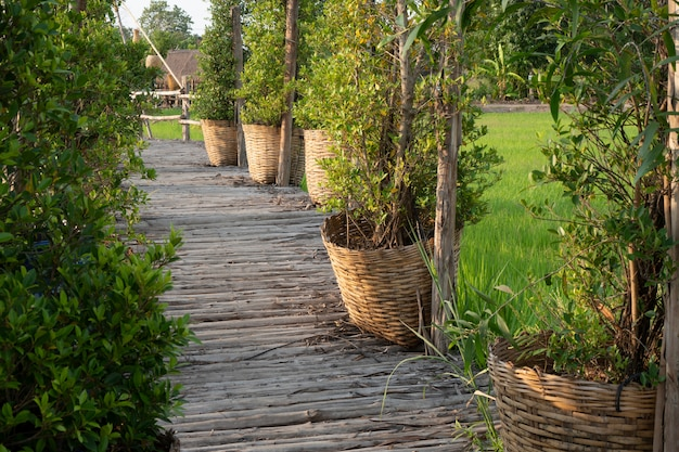 Pont de bambou qui s'étend dans les rizières