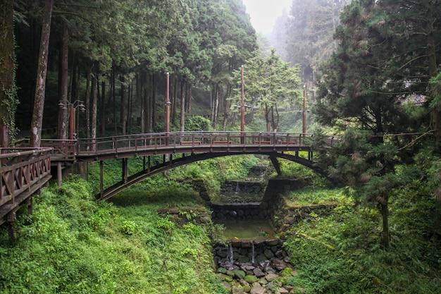 Le pont de bois dans la forêt à alishan, taiwan