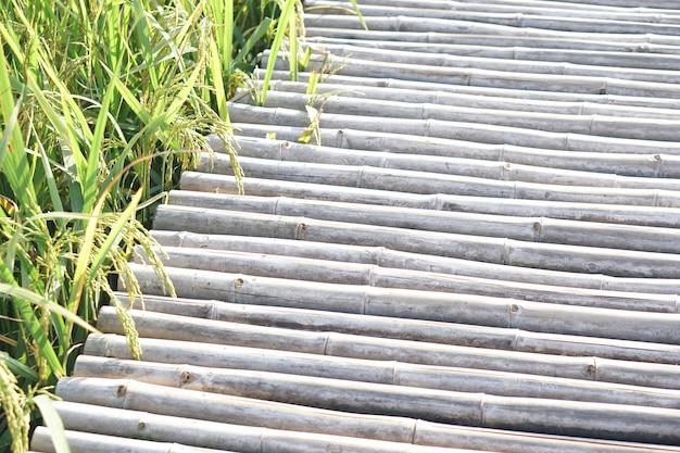 Pont de bois dans une rizière