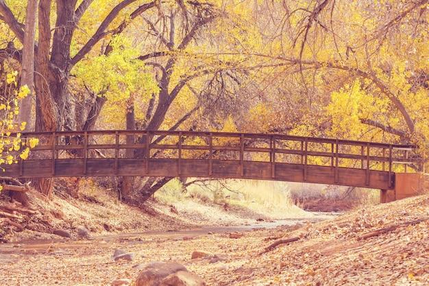 Pont en bois étonnant dans la forêt d'automne