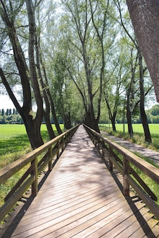Pont en bois s'étendant au loin au-delà de l'horizon avec une allée d'arbres par temps clair