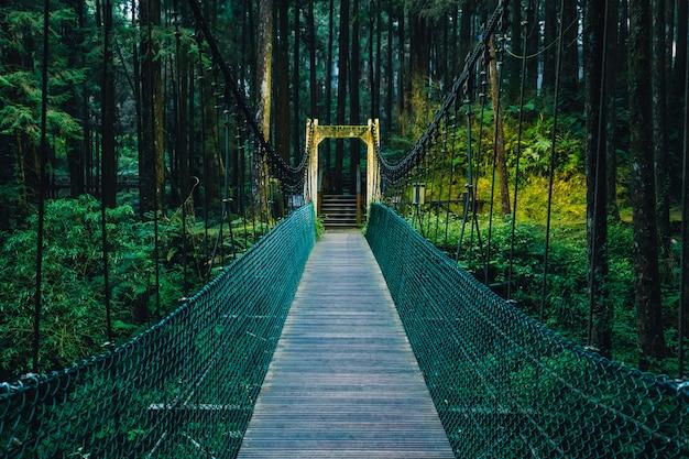Pont de corde vers la forêt dans la zone de loisirs de la forêt nationale d'alishan.