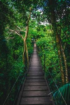 Pont dans la jungle