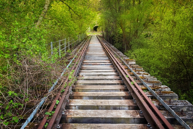 Pont ferroviaire abandonné entouré d'une végétation luxuriante.
