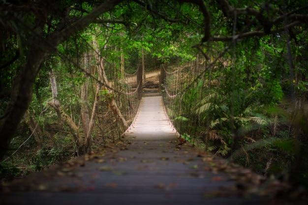 Pont suspendu de corde dans la forêt, situé au parc national de khao yai, thaïlande