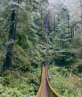 Pont suspendu fabriqué dans la forêt