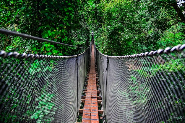 Pont suspendu ou passerelle pour les aventuriers.