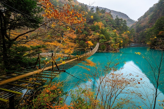 Pont suspendu de yume no tsuribashi sur la rivière émeraude en automne à sumatakyou