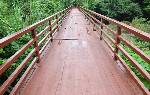 Pont vers la jungle, parc national de khao yai, thaïlande