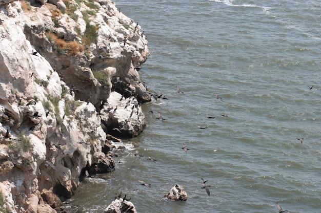 Population de cormorans au cap kazantip (krimea, ukraine)