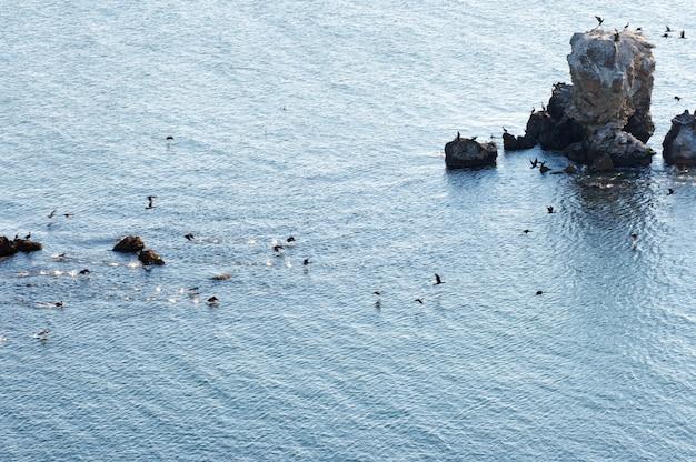 Population de cormorans sur le cap kazantip (krimea, ukraine)