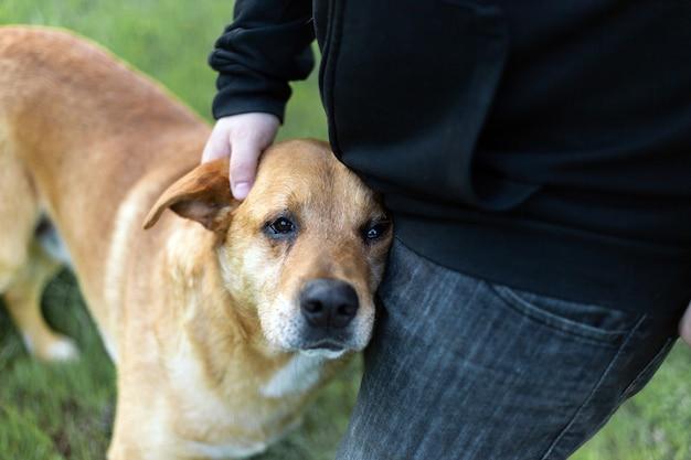 Portrait d'un adorable chien heureux caressé par la main d'un homme dans un parc verdoyant