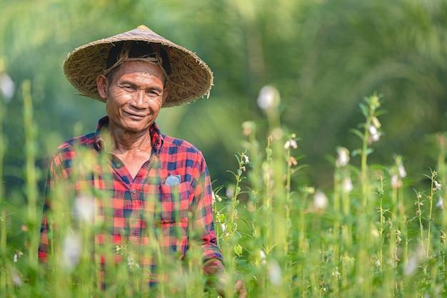 Portrait d'un agriculteur asiatique senior heureux au jardin de sésame.