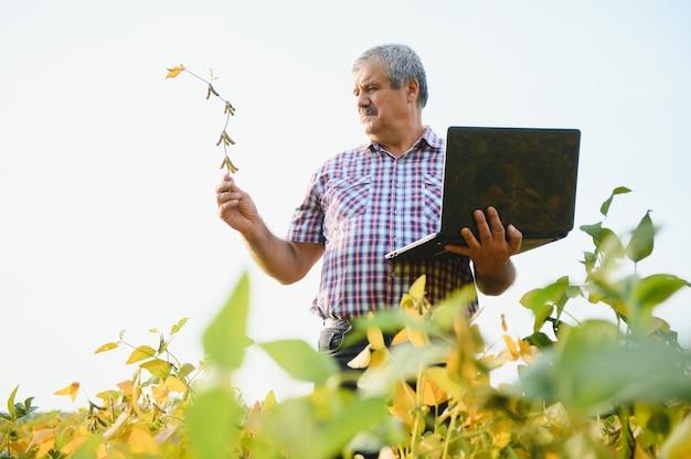 Portrait d'un agronome agriculteur travailleur senior debout dans un champ de soja vérifiant les cultures avant la récolte. production et culture d'aliments biologiques.