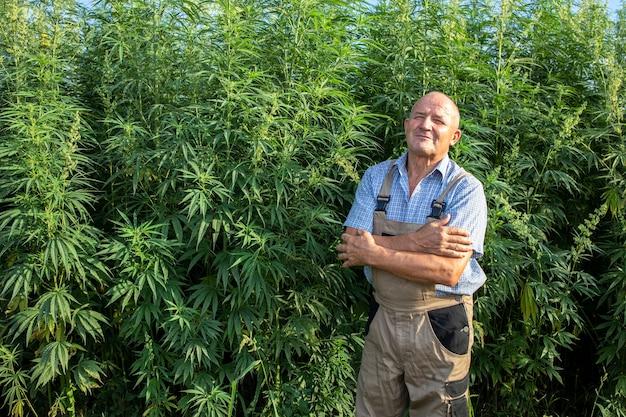 Portrait d'agronome senior debout par champ de chanvre ou de cannabis et plante de cannabis sativa