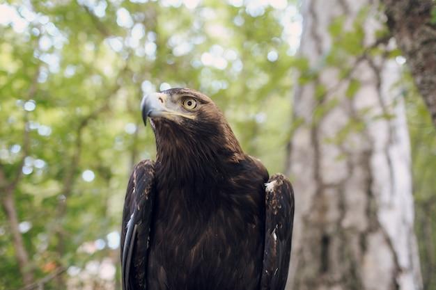 Le portrait d'aigle