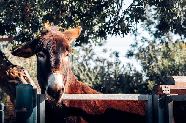 Portrait d'un âne dans une ferme