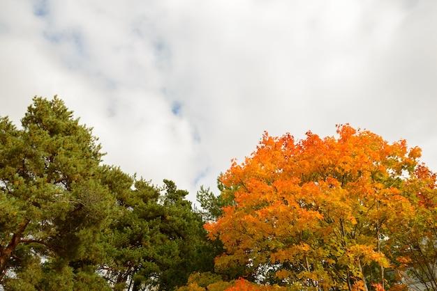 Portrait d'arbres avec des feuilles vertes et orange donnant sur le ciel plein de nuages en saison d'automne