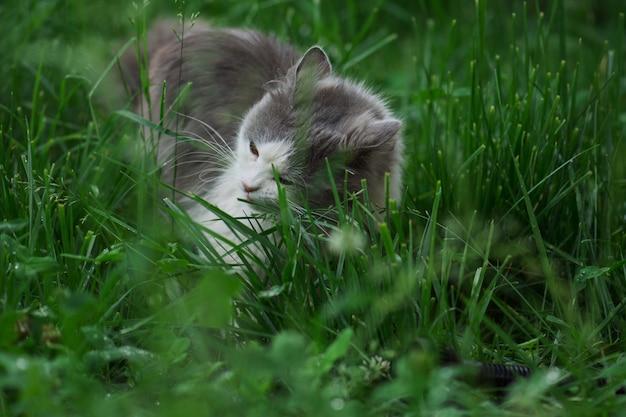 Portrait de beau chat aux yeux jaunes