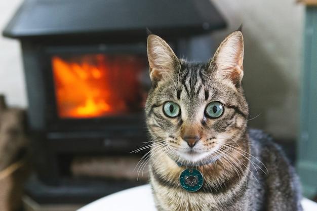 Portrait d'un beau chat domestique à la maison avec un feu en arrière-plan