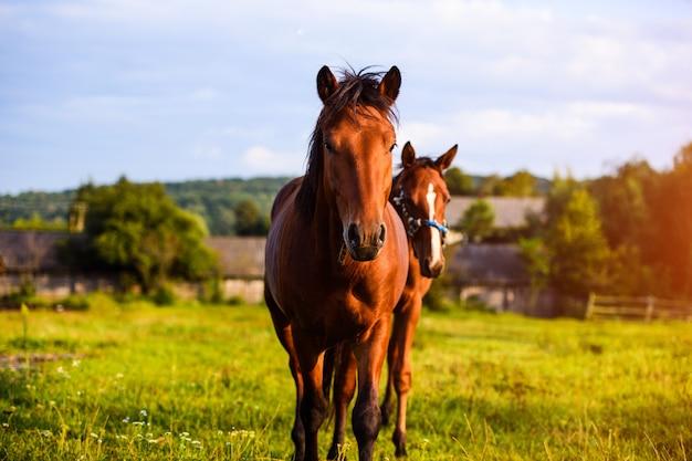 Portrait de beau cheval en été