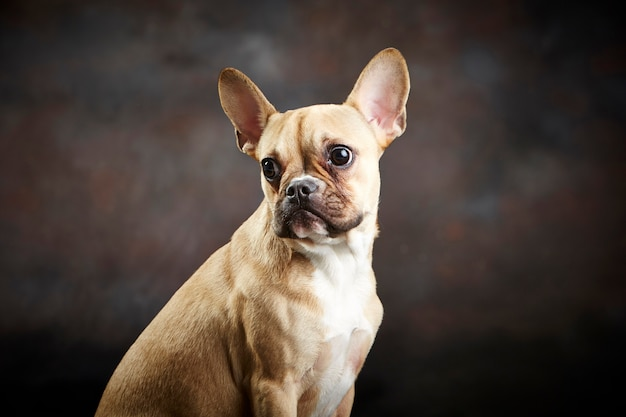 Portrait de bébé chien