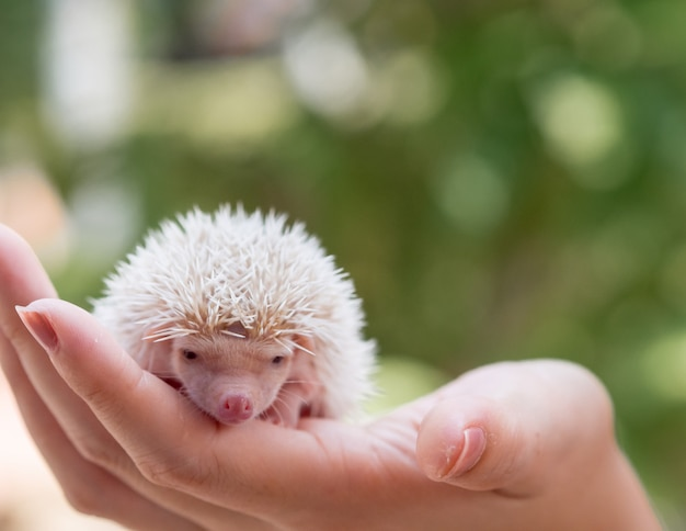 Portrait de bébé hérisson mignon