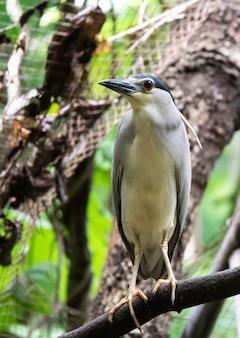 Portrait de bel oiseau