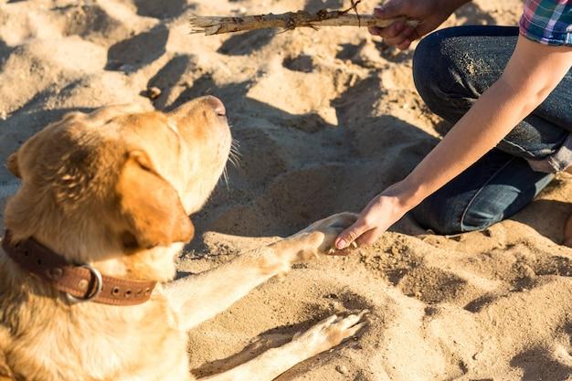 Portrait d'une belle jeune femme à lunettes de soleil assise sur une plage de sable avec une fille de chien golden retriever...
