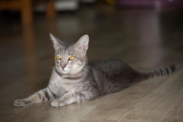 Portrait de chat avec un arrière-plan flou.
