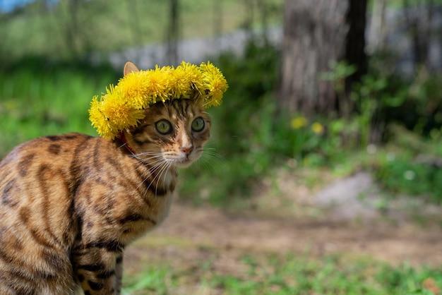 Portrait d'un chat bengal dans une couronne de fleurs sur le fond de la nature