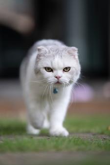 Portrait d'un chat blanc et gris