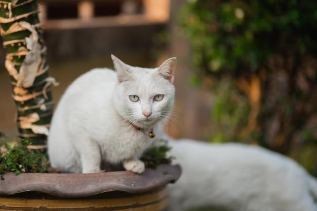 Portrait de chat blanc sur la pelouse