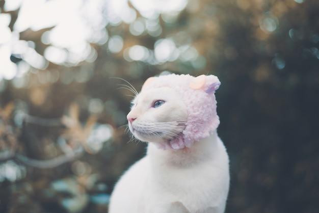 Portrait de chat blanc portant chapeau, concept de mode animal.