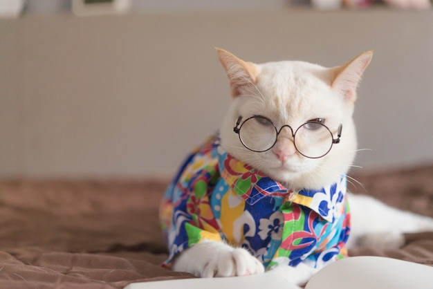 Portrait de chat blanc portant des lunettes et livre de lecture