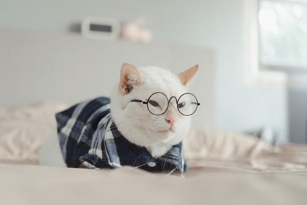 Portrait de chat blanc portant des lunettes