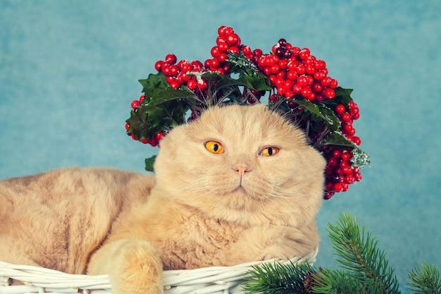 Portrait de chat avec une couronne de noël verte avec des décorations rouges sur la tête