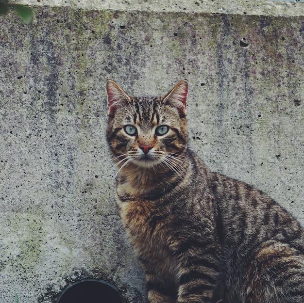 Portrait de chat dans la rue