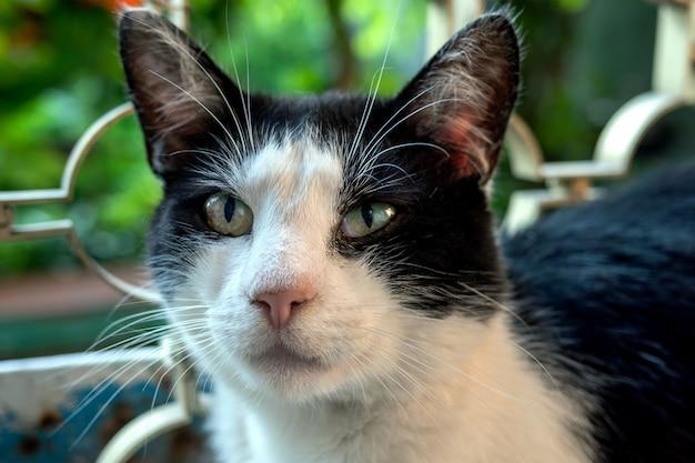 Portrait de chat domestique noir et blanc, qui est aux yeux grands ouverts.