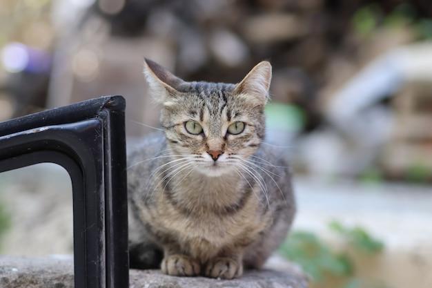 Portrait d'un chat domestique à rayures posant sur une journée ensoleillée à l'extérieur
