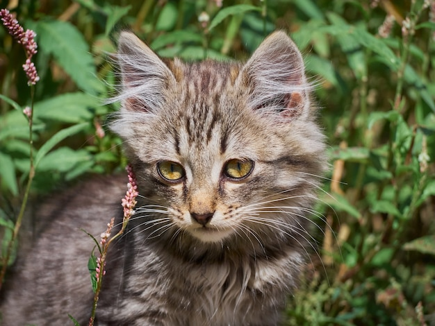 Portrait d'un chat drôle mignon.