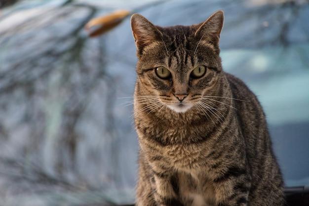 Portrait de chat sur fond flou