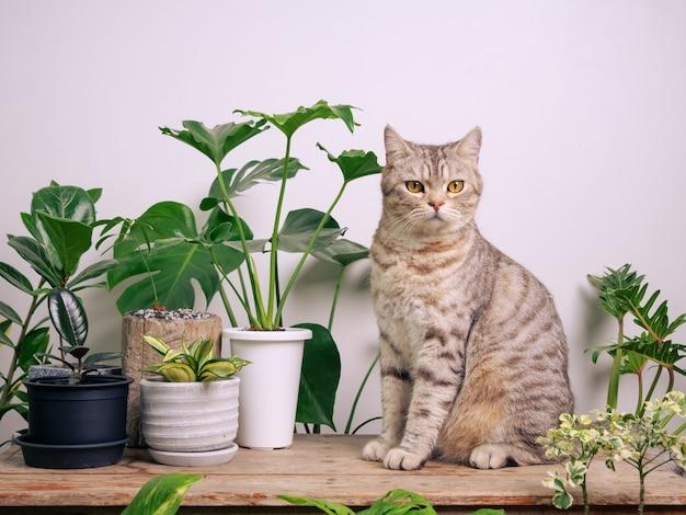 Portrait de chat gingembre sur table en bois avec air purifier les plantes d'intérieur monstera philodendron plante serpent dans la chambre