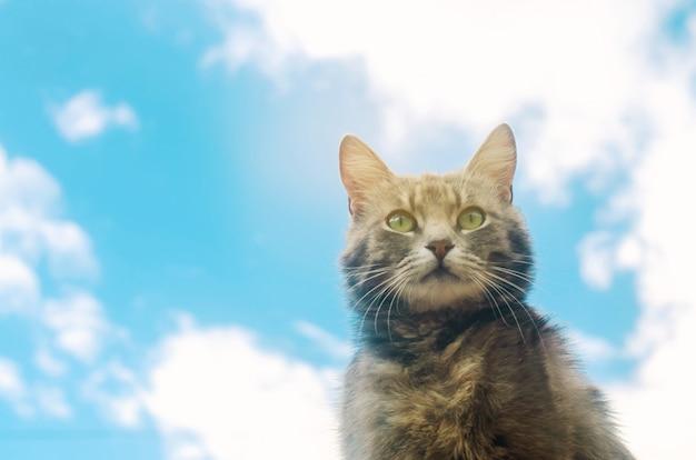 Portrait d'un chat gris sur ciel bleu.