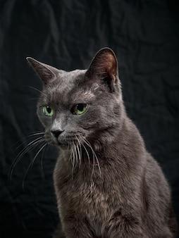 Portrait de chat gris foncé