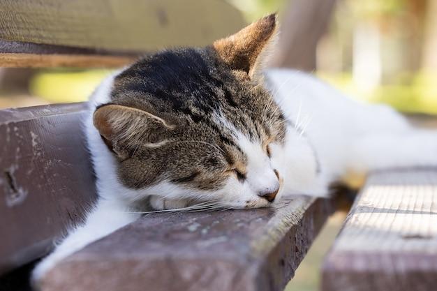 Portrait d'un chat mignon